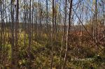 Camp 4 building site, Gunflint Lake, October 2014.